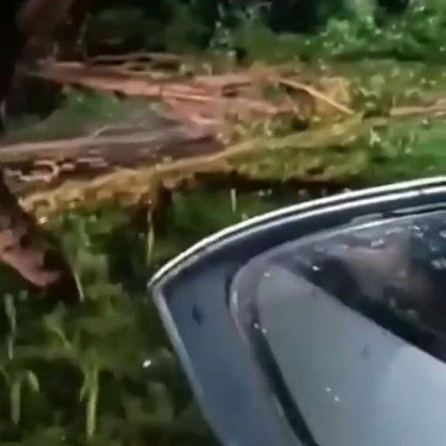 Ado Pohon tumbang Di Tapak Jedah Kota Bengkulu. Sabtu Malam 30/5/2020