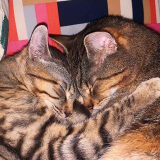 Kermi & Bibi