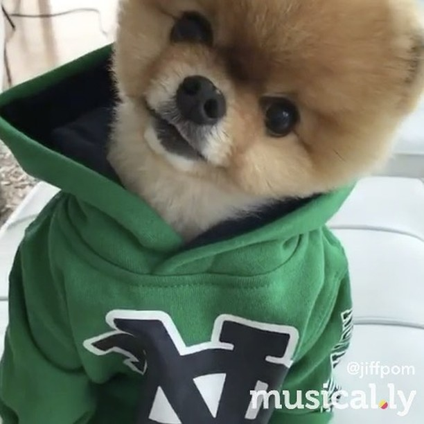 Happy Sunday ❤️ @jiffpom Jordans - Jacob Sartorius. #musicallyapp #JacobSartorius #Jordans #musik #musikvideo #musical #musica #followme #bestoftheday #instadaily