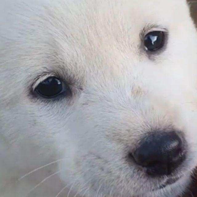 강아지 입양하실분?