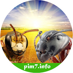 Что говорят насекомые