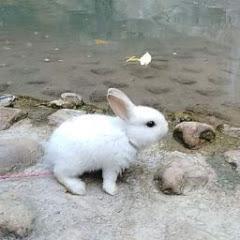 น้องส้วม กระต่ายยักษ์