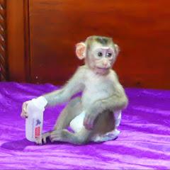 Monkey Donal
