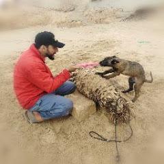 club de dressage les chiens à Maroc