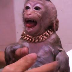 Monkey Baby Too