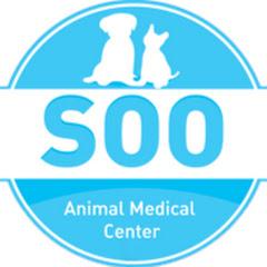 24시 수동물병원