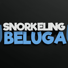 Snorkeling Beluga