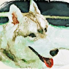 家有賤狗Husky