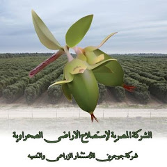 الجوجوبا سيتى Jojoba City