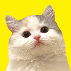 ニャンチューバーつくし 【関西弁でしゃべる猫】