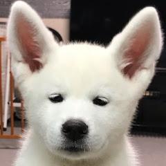 秋田犬もんたろう