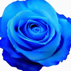 カード セラピストBlue rose Lino