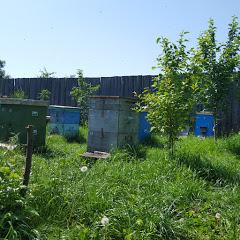 Пчеловодство Дальнего Востока
