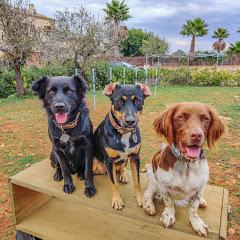 3 cute Dogs - Romeo, Jule, Mallow & family