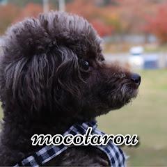 モコタロウmocotarou