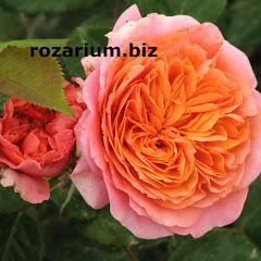 Питомник Роз Полины Козловой rozarium biz