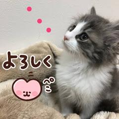 子猫のリチャード【WeegieTV】
