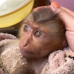 Monkey Bono