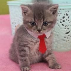 Kitten Street