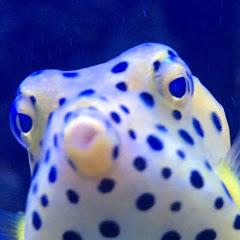 Prestige Reef