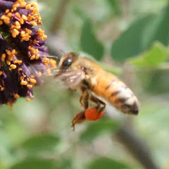 꿀벌아고마워