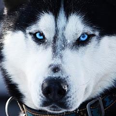 كلاب#