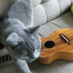 hiroshi koizumi / 小泉博 Ukulele , Guitar
