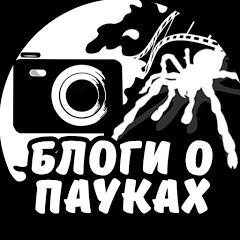 Блоги о пауках