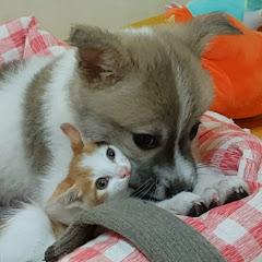 복받은 캣독Blessing CatDog