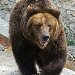 ursu bear