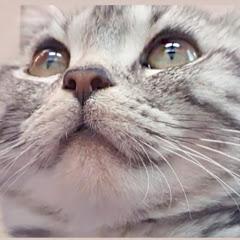 일요일고양이 Sunday Cat