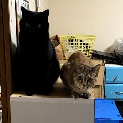 猫好きch