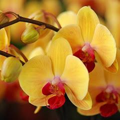 Орхидеи в воде от Ирины Катаевой