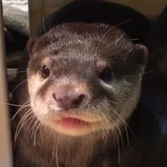 이웃집수달 NB otter