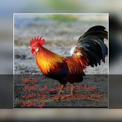 تربية الدجاج العربي في العراق