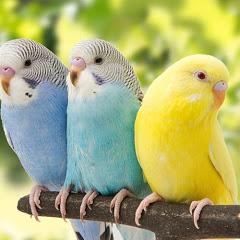 perrot squard