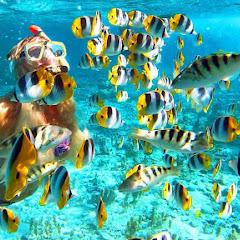 Snorkeling - Topic
