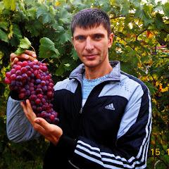 Максим Мойсеенко