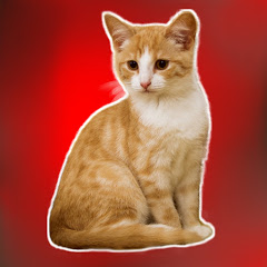 Kucing Sholawat