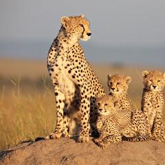 Kruger Wild Animals