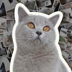 Cia Cat Diary
