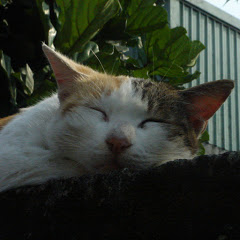 Cat Vanished