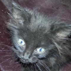 Kitten is a Life