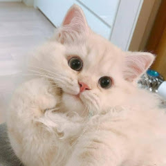 Cute Paws
