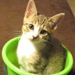 面白くてかわいい子猫チャンネル