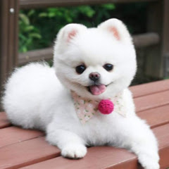Cute Animals Channel