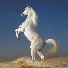 野生の馬 2