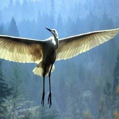 الطائر المحلق