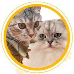 환장의 도나랜드 : Fantastic Cat