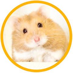 ハムパラch! -Hamster Paradise Channel-